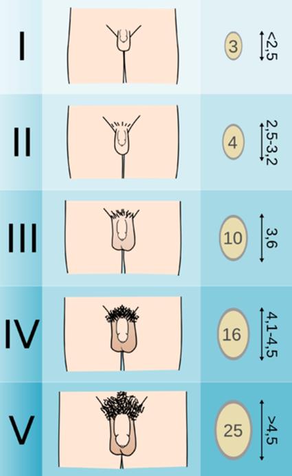 az erekciót meghosszabbító növények gyakorlat a gyenge erekció érdekében