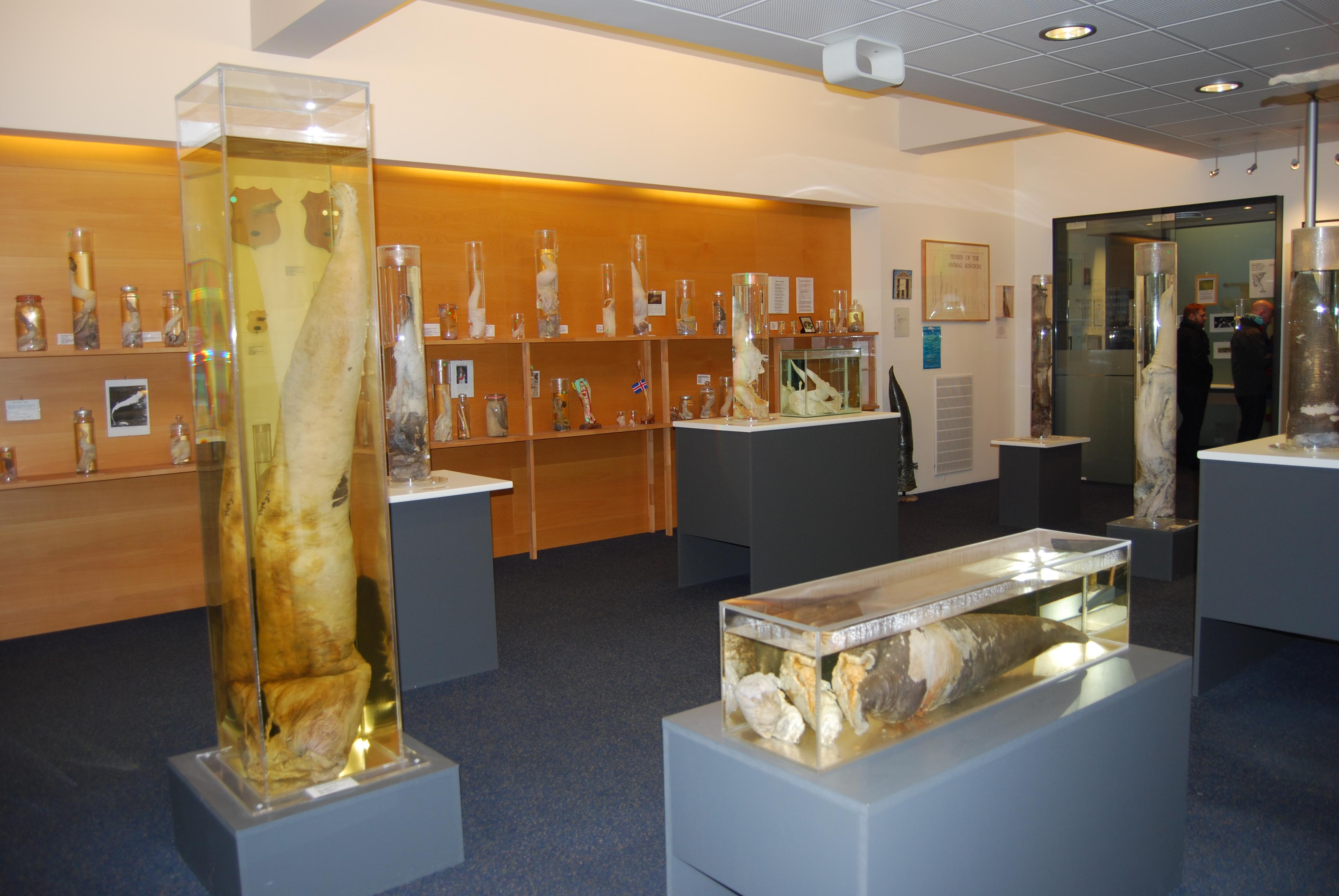 Plázs: Itt találja a világ legnagyobb péniszgyűjteményét | richihir.hu