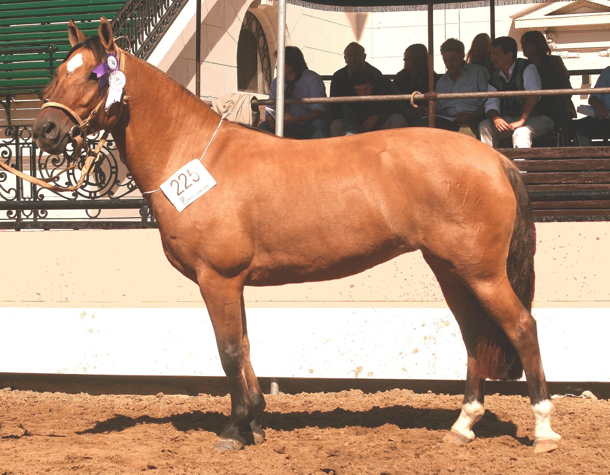 Kólika lovaknál: tünetek, megelőzés, teendők