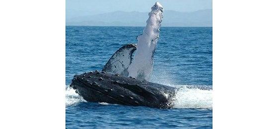 Madagaszkár bálnái