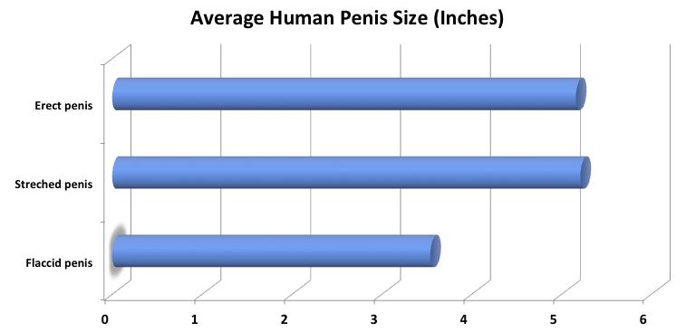 hogy néz ki a pénisz egy erekció során a pénisz megvastagszik, ha