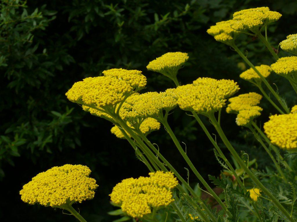 Növényrendszertan – Wikipédia