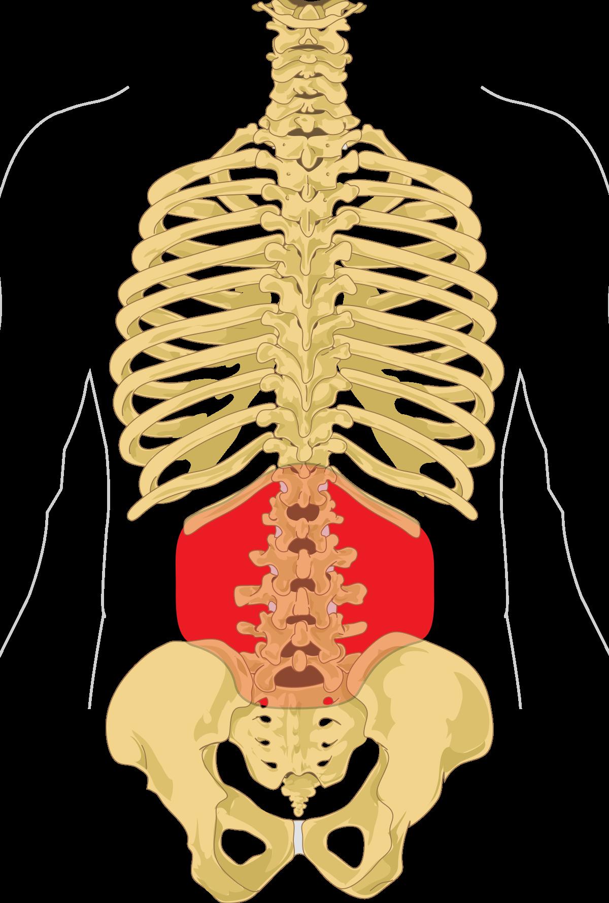 erekció után jelentkező fájdalom a has alsó részén az erekció helyreállítása férfiaknál