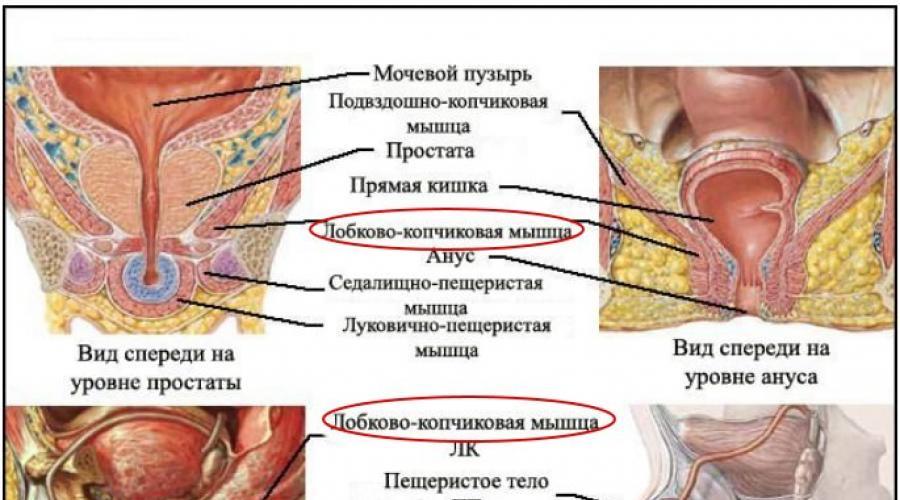 erekciós kegel gyakorlatok