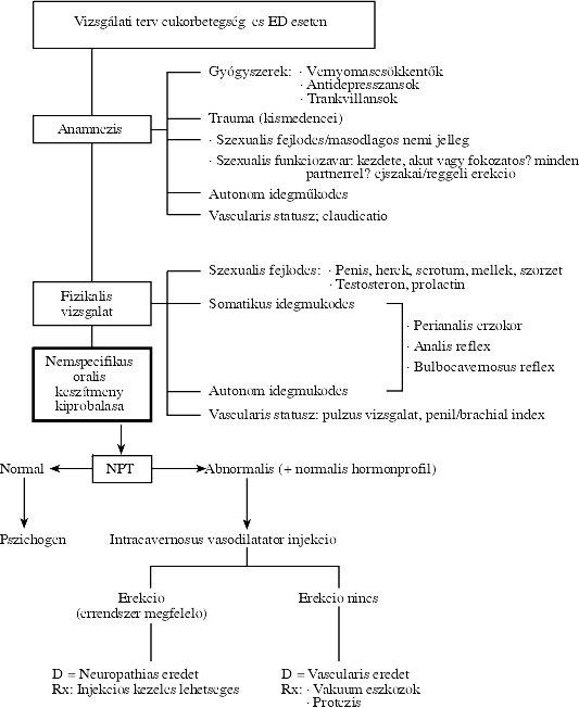 diabetes mellitus erekció normális idő a férfiak erekciójára