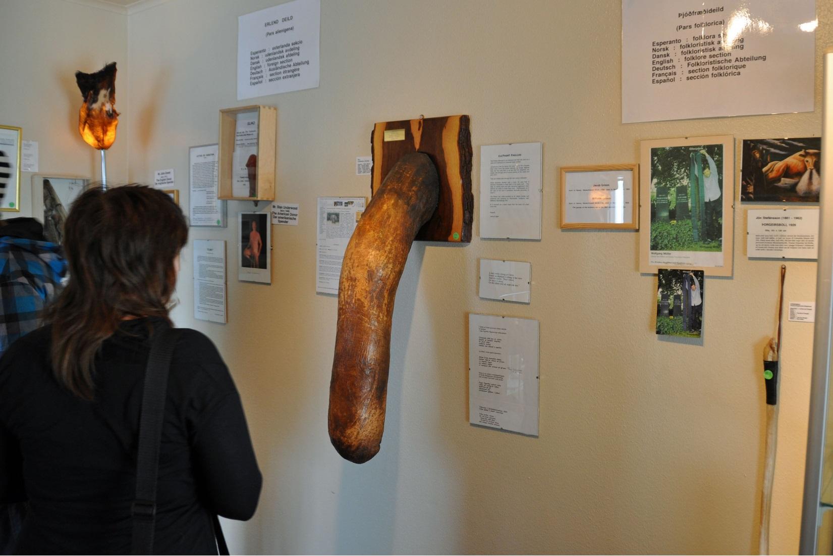 Izlandi Péniszmúzeum