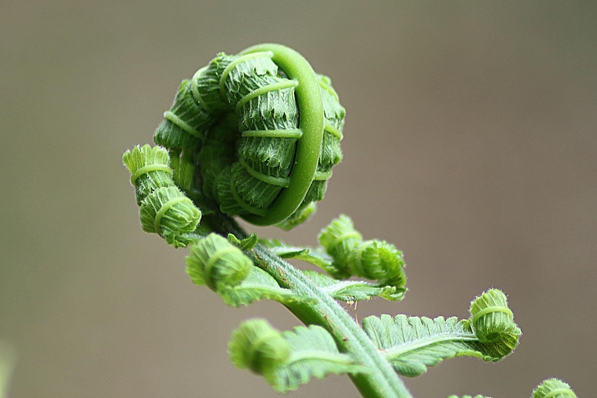 Az öt legkülönlegesebb növény