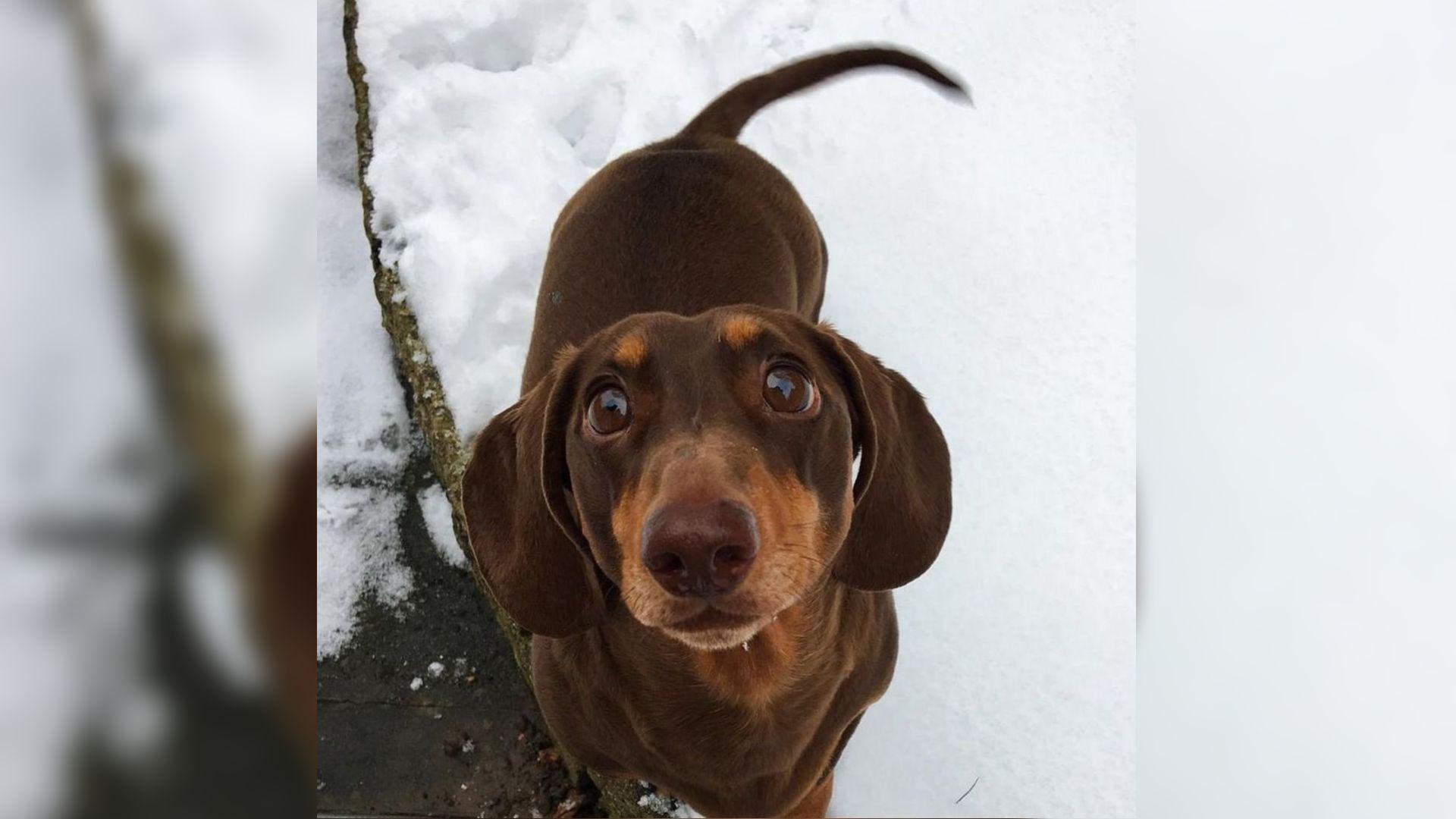 Szuka tacskó kutyáink verekszenek - Kutyák - richihir.hu