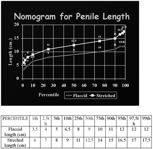 a pénisz átlagos mérete az erekció során