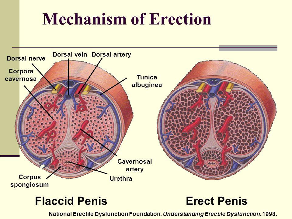 merevedés az alváshiánytól milyen tablettákat inni, ha fokozza az erekciót