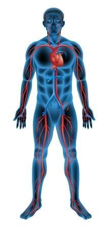 honnan származik vér a merevedés során prosztatagyulladás fokozott erekció