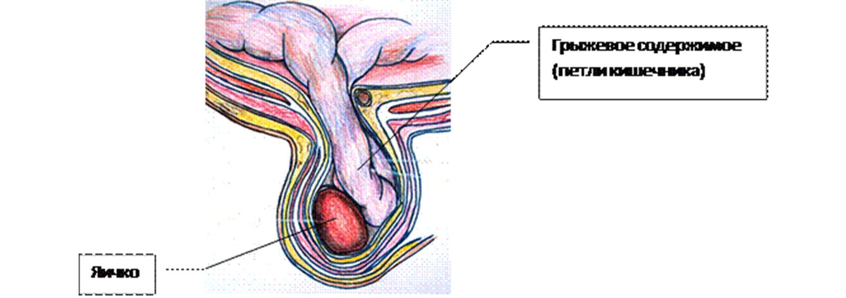 hogy néz ki az erekciós pénisz idegimpulzusok a pénisz felé